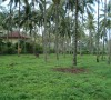 Dream estate park right view